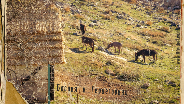 В Боснию и Герцеговину на Машине