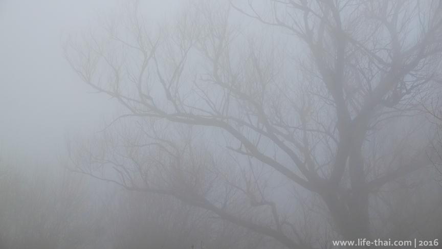 Туман, январь в фото на life-thai.com