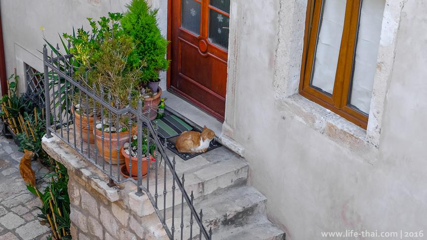 Дубровник, коты