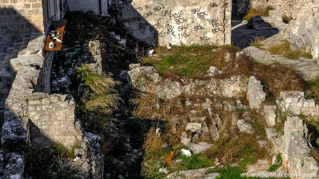 Кошачье гетто в Дубровнике