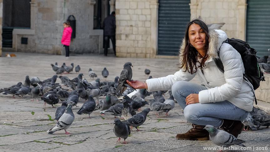 Голуби, Дубровник, фото