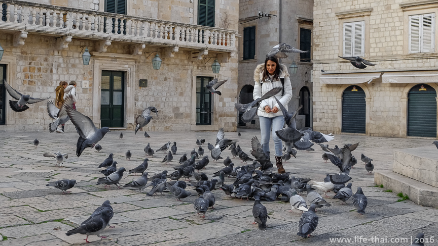 Голуби, Дубровник