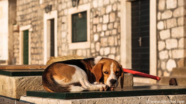 Пёс спит, Росе, Черногория