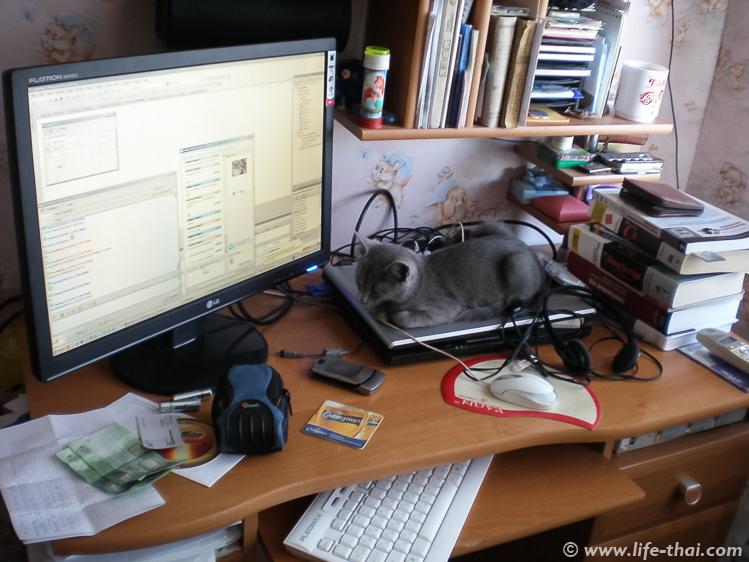 Рабочее место с котом, 2008 год, Керчь