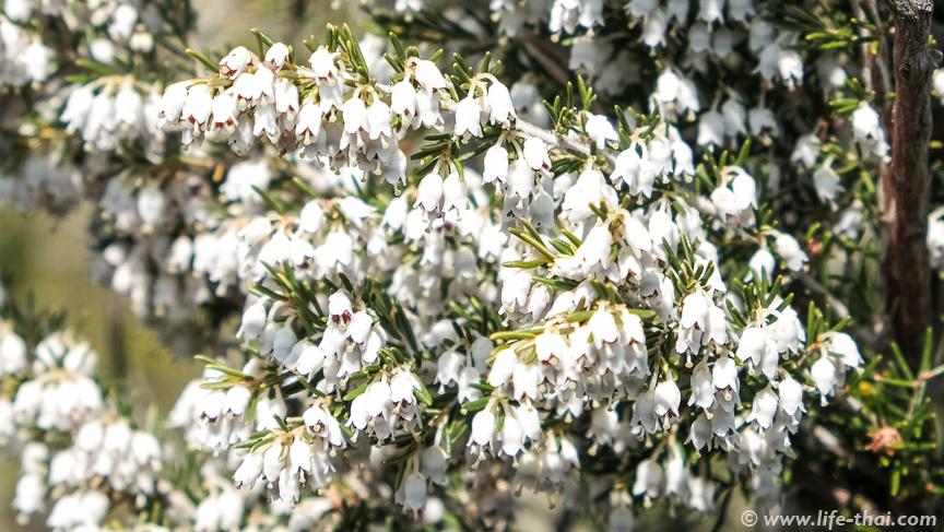 Цветы, Черногория