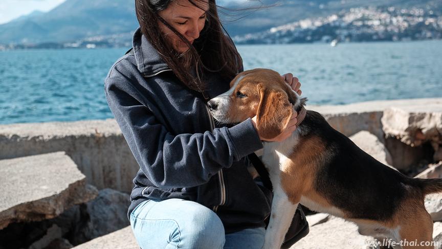 Я и пёс, Черногория