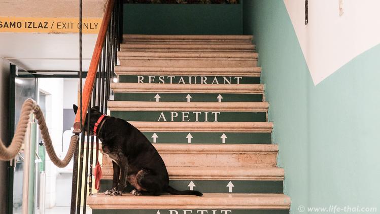 Вечерний Сплит, собака на ступеньках, Хорватия