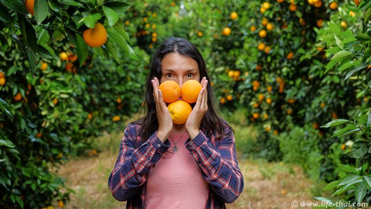 Апельсиновые плантации на Северном Кипре