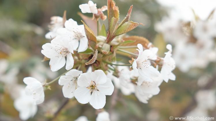 Весна в Черногории, всё цветёт