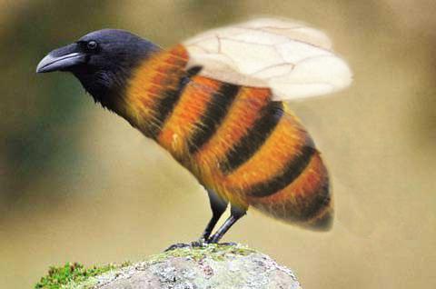 Ворон-пчел