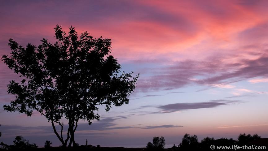 Дерево на закате, Закат на Кипре, фото
