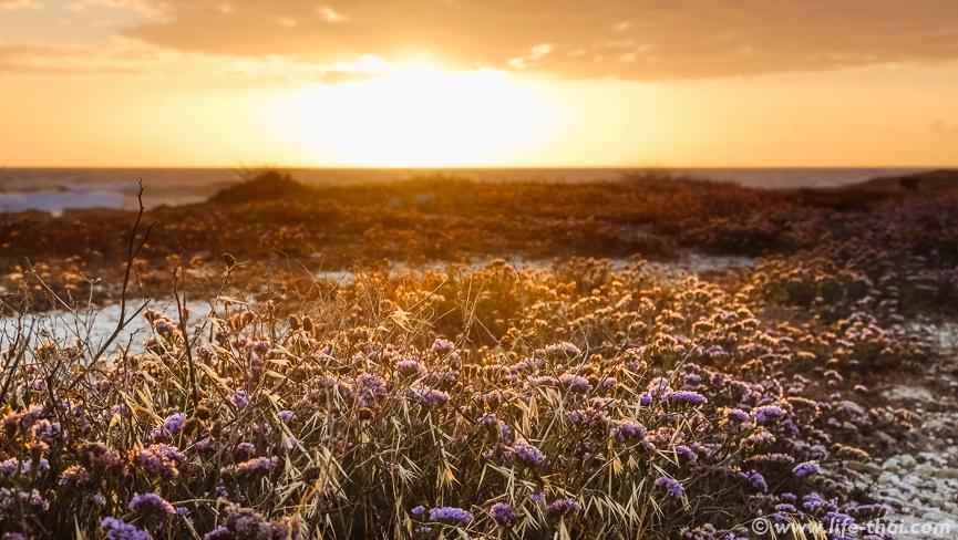 Цветы на закате, Закат на Кипре, фото