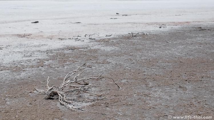 Солёное озеро в Ларнаке, достопримечательности Кипра