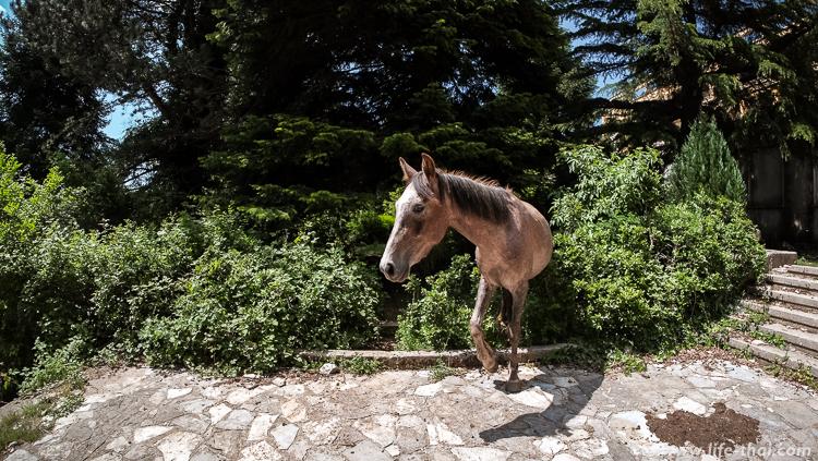 Лошади в нац. парке Даити, Албания