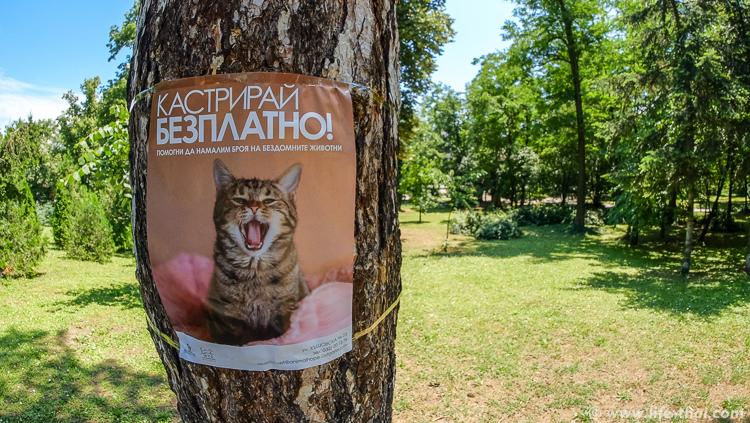 Бездомных животных в Болгарии бесплатно кастрируют и чипуют