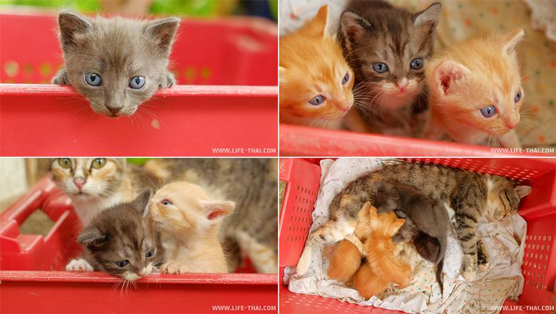 Котята, маленькие разбойники, кошка в шоке!