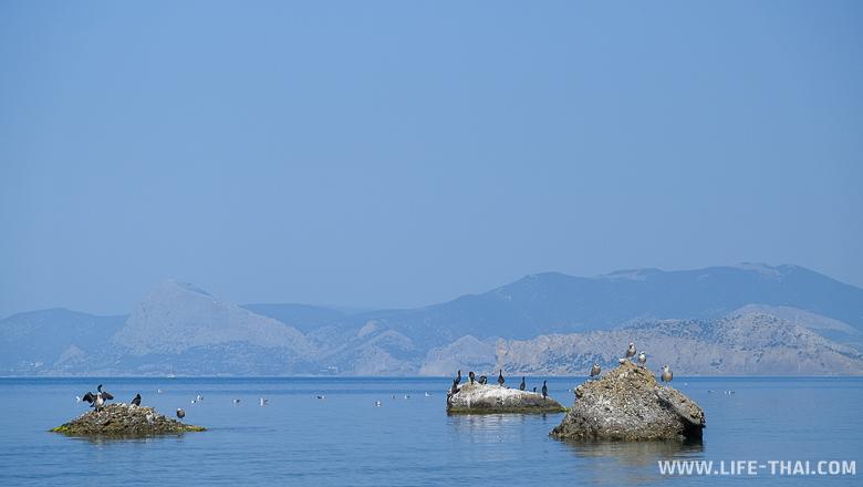 Птицы на Меганоме, Крым