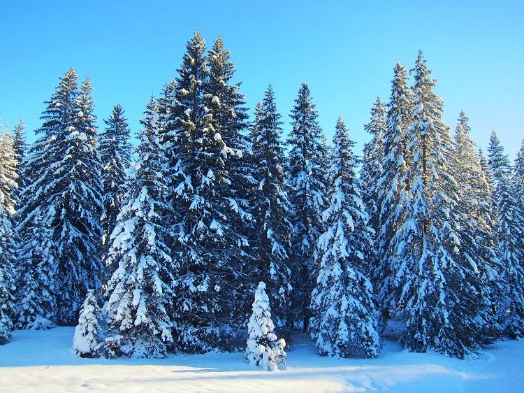 Дурмитор зимой, Черногория