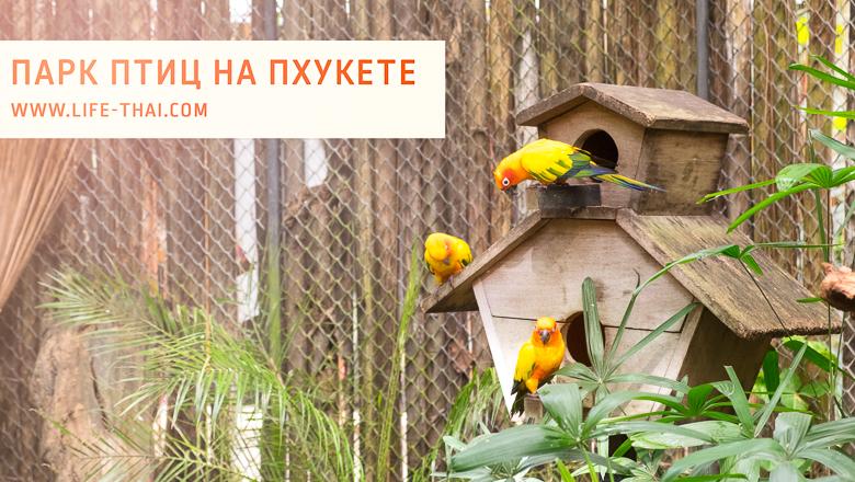 Парк птиц на Пхукете. Наш отзыв