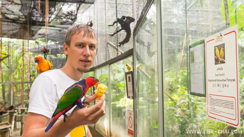 Кормление попугаев в парке птиц на Пхукете, Таиланд