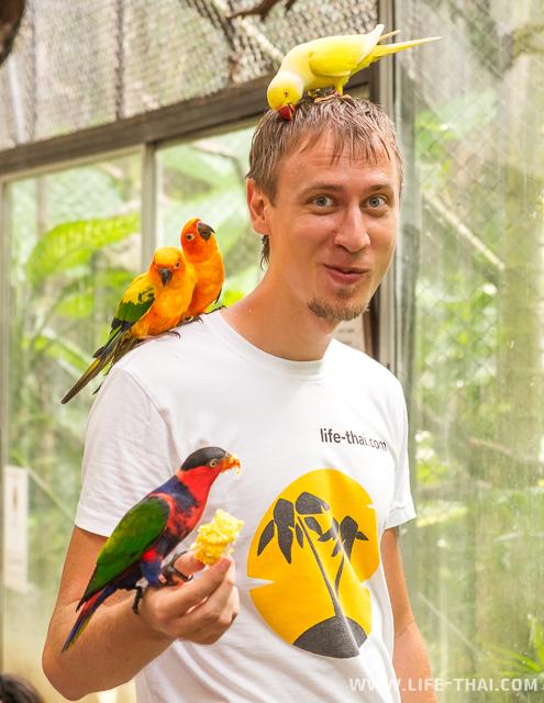 Попугаи на Пхукете в Bird park