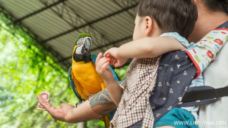Ребёнок и попугай, парк птиц на Пхукете в Таиланде