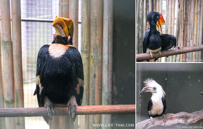 Фото калао в парке птиц на Пхукете, Таиланд