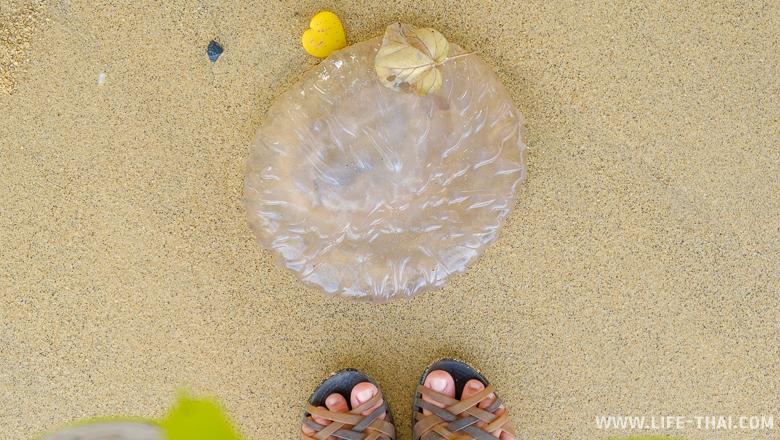 Медузу выкинуло на берег, Остров Коконат, Пхукет