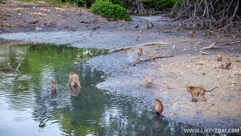 Площадка для кормёжки обезьяна на Ко Сире, ПХукет