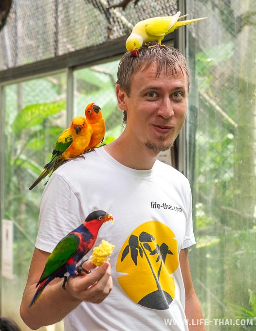 Парк птиц на Пхукете, Таиланд