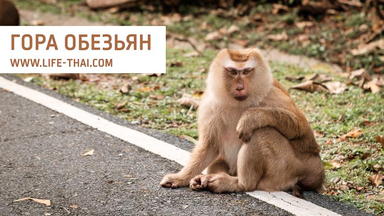 Гора обезьян - ещё одна достопримечательность Пхукета