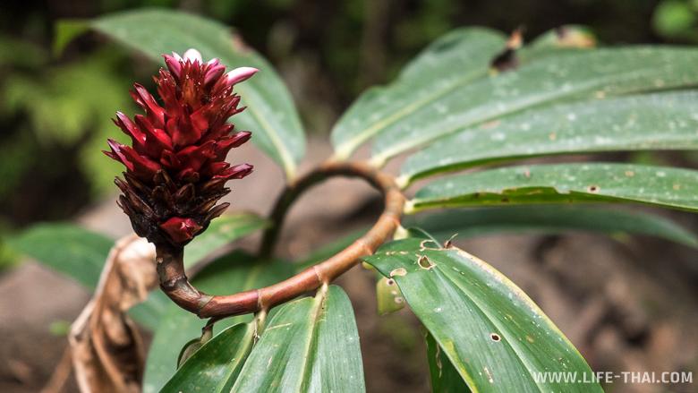 Растения у водопада Тон Саи на Пхукете