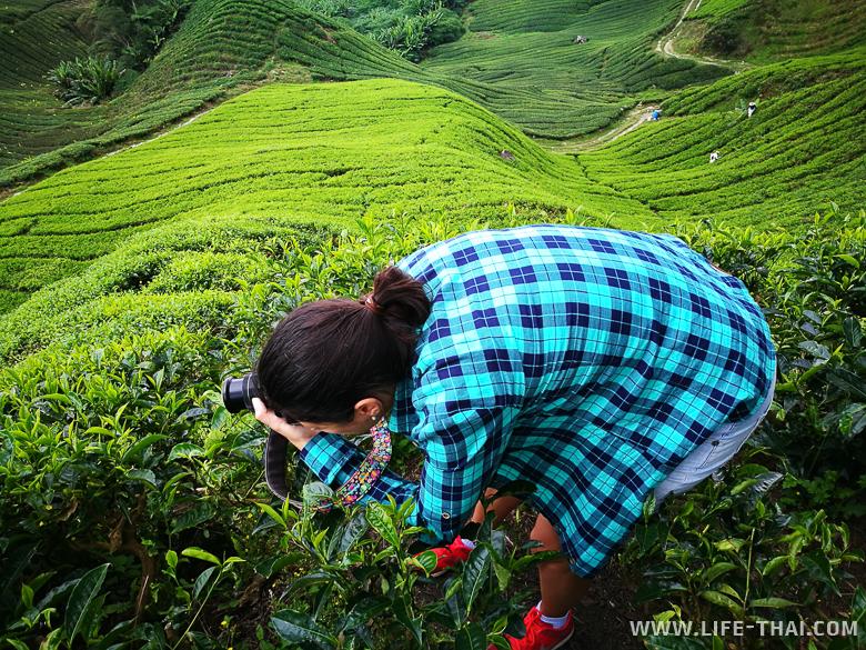 Фотографирую чай. Это вдохновение в чистом виде!