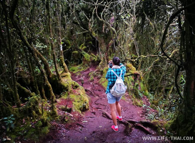 Мшистый лес на вершине Бринчанг - довольно грязное место