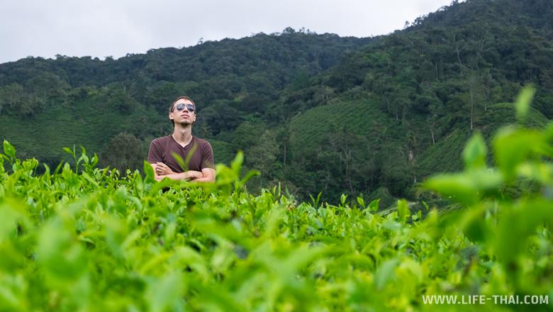 Игорь принимает солнечные ванные на чайной плантации, Малайзия