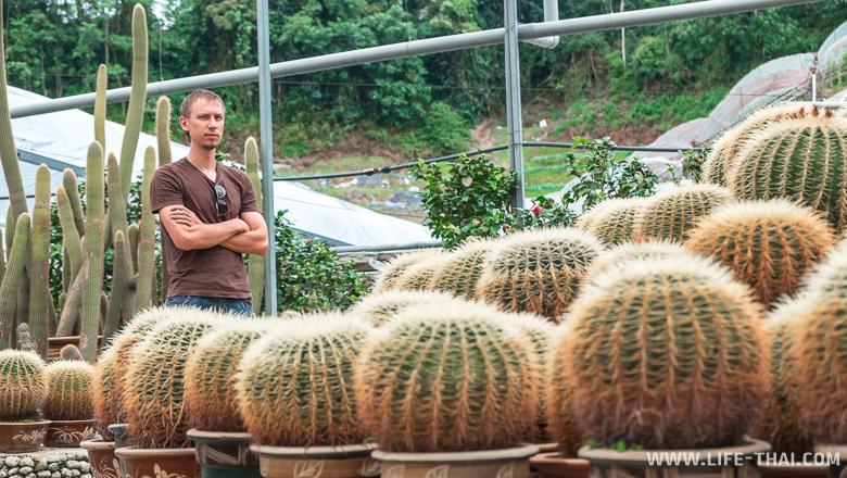 Игорь и кактусы в кактусовой долине, Камерон Хайлендс, Малайзия