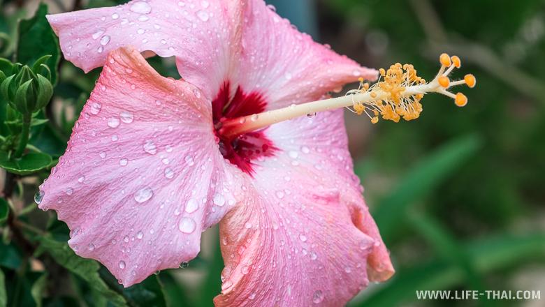 Цветы в долине кактусов, достопримечательности Бринчанг, Малайзия