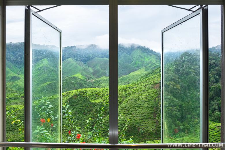 Вид из туалета в чайном кафе, Камерон Хайлендс, Малайзия