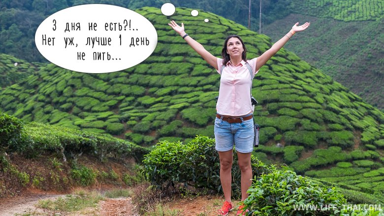 Я на чайных плантациях обдумываю китайскую поговорку
