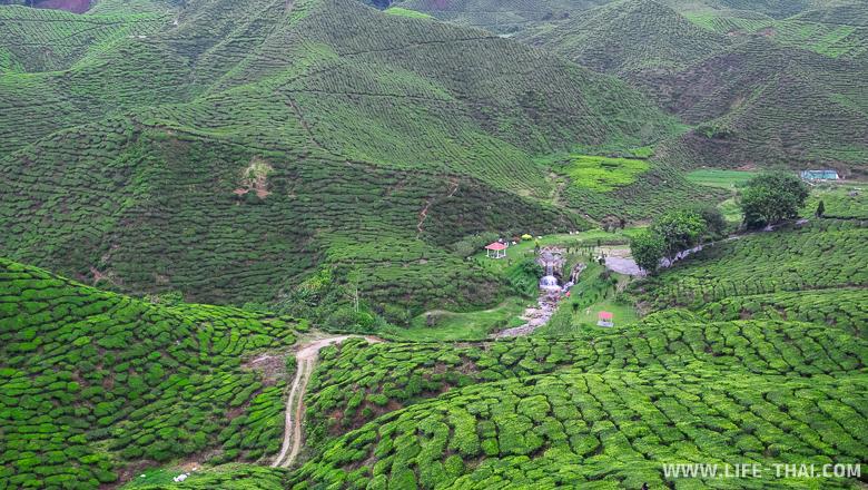 Чайная плантация, Камерон Хайлендс, Малайзия