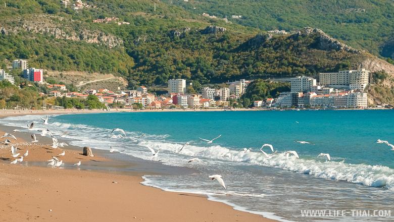 Чайки на пляже Бечичи около Будвы, Черногория