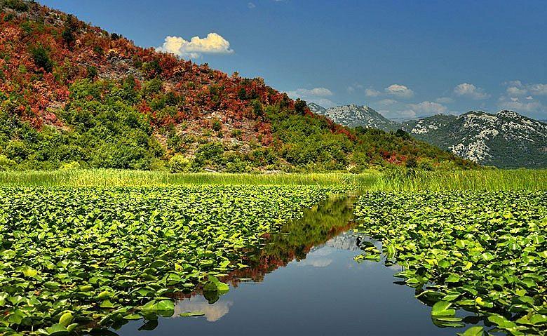Скадарское озеро - одна из достопримечательностей Черногории