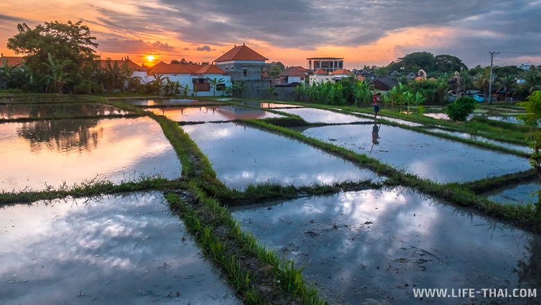 Закат у рисовых полей, Бали