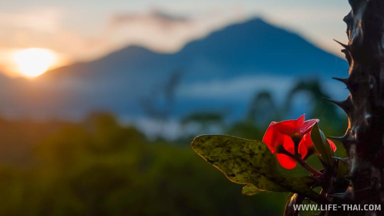 Цветок на рассвете и два вулкана, остров Бали