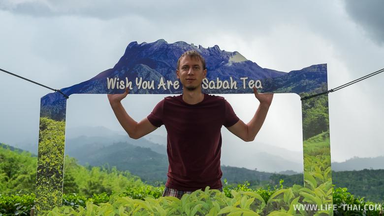 Чайные плантации в Сабахе, Малайзия