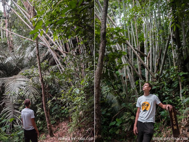 Национальный парк Крокер Рэндж, достопримечательности Борнео, Малайзия