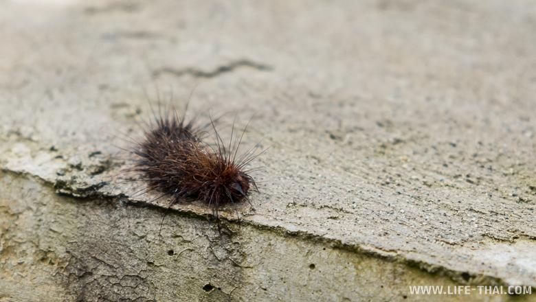 Промокшая гусеница - ещё не бабочка и уже не бабочка