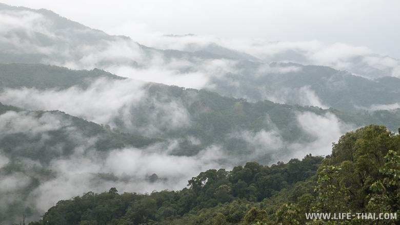 Фото склона горы в штате Сабах, Малайзия