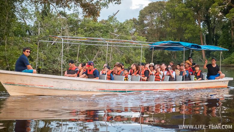 Круиз по реке Клиас, экскурсия к носатым обезьянам, Кота Кинабалу, Малайзия