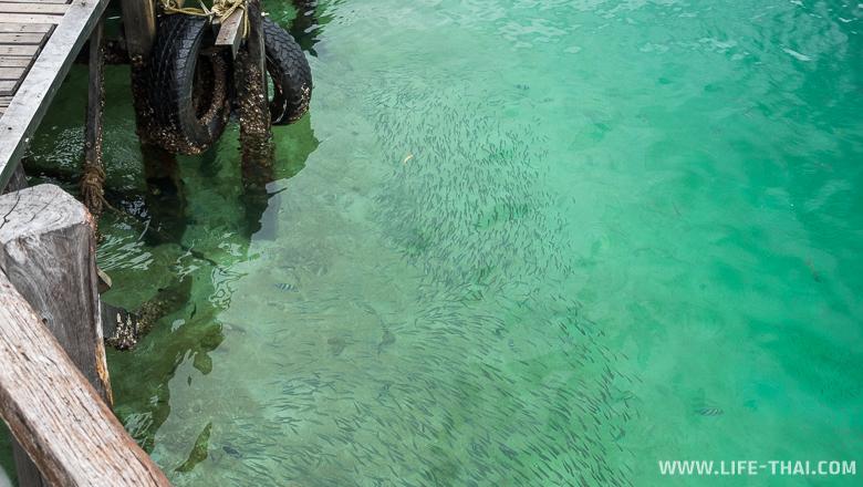 Прозрачнейшая вода в морском парке около Кота Кинабалу, остров Борнео